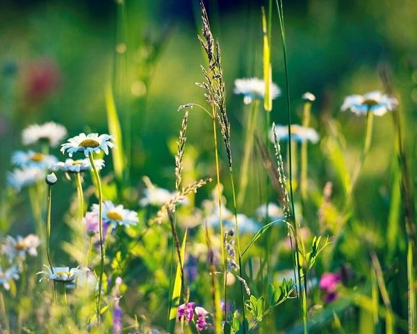 травы сжигающие жир