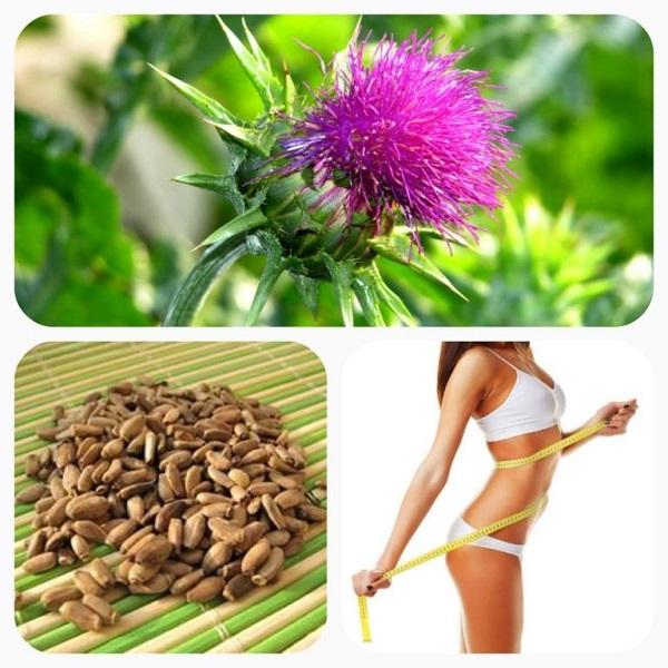 Расторопша для похудения как действует на организм