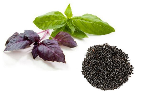 Базилик для похудения: учимся правильно употреблять листья и семена в диетических блюдах и напитках