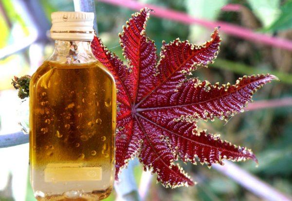Касторовое масло для бровей: полезные свойства и способы применения