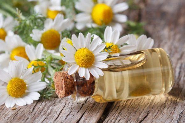Лечебное масло ромашки, его полезные свойства и способы применения