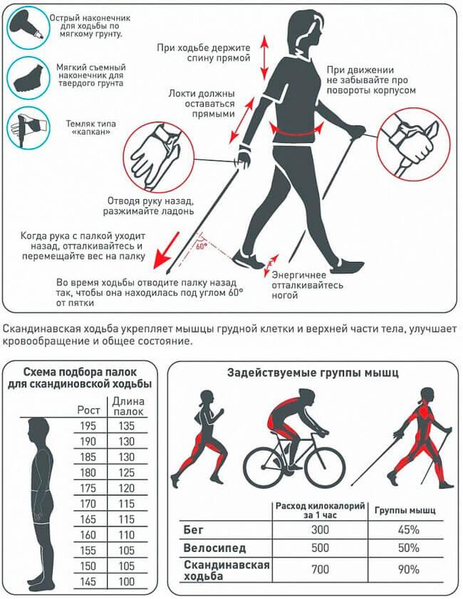 Скандинавская ходьба — идеальный вид спорта для похудения в любом возрасте