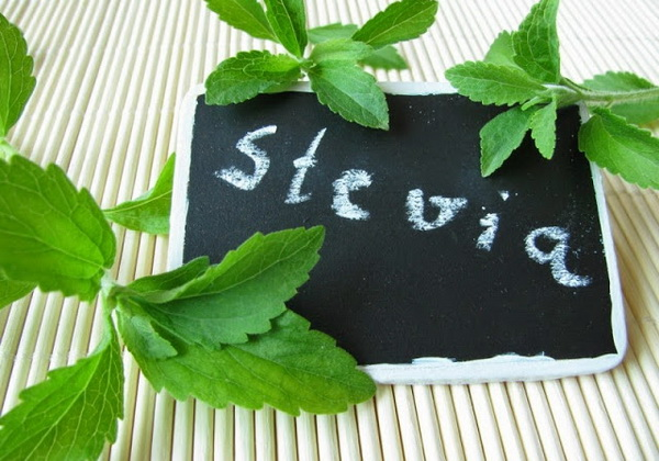 Стевия – идеальное средство для похудения без отказа от сладкого