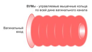Тренажёр для интимных мышц Муранивского: как использовать, не навредив себе