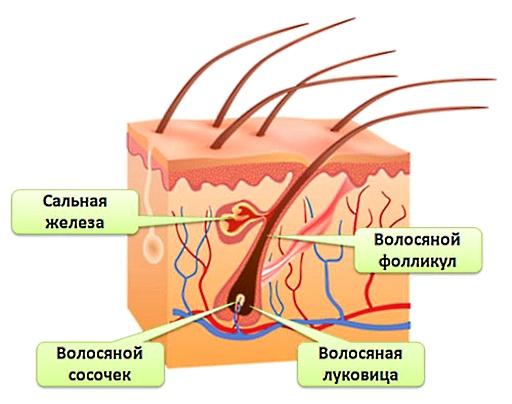 Удаление волосков с помощью нити: секреты процедуры
