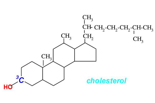 Холестерин: так ли он плох, как его малюют? Вся правда о его роли в организме