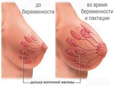 Как вернуть красивую форму груди после кормления, не прибегая к пластике