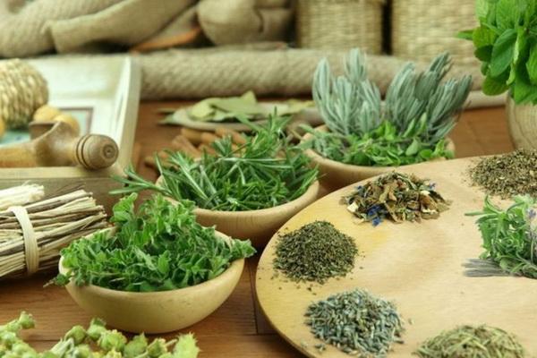 Травы для снижения аппетита: списки самых эффективных для стойкого и быстрого похудения