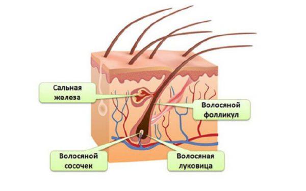 Что такое электроэпиляция: подробно о процедуре