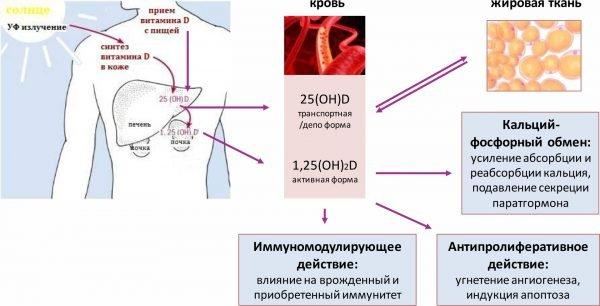 Загар: как образуется и каких видов бывает